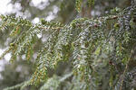 What is an Evergreen Requisition and Why Use It?
